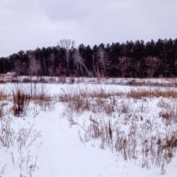 Between the Woods and Frozen Lake