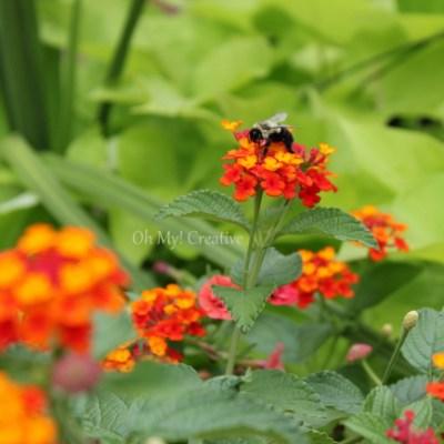 Photo Friday #1 – Bee-autiful Summer Flowers