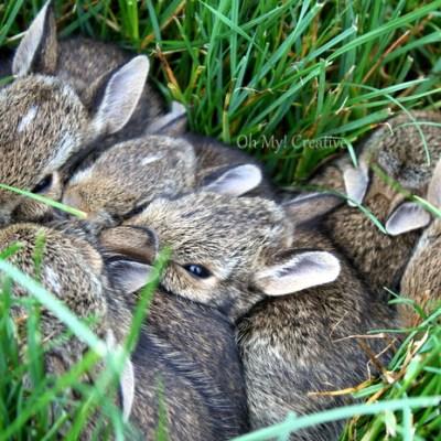 Photo Friday #3 – Baby Bunnies