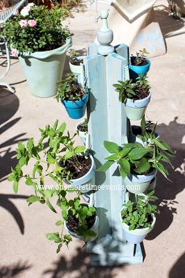 Spinning Mint Herb Garden