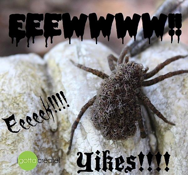 wolf spider eek at I Gotta Create