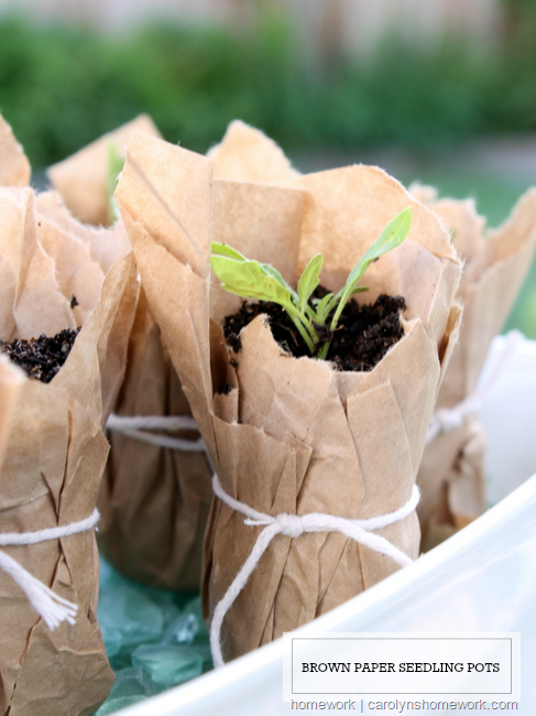 Brown Paper Seedling Pots via - homework