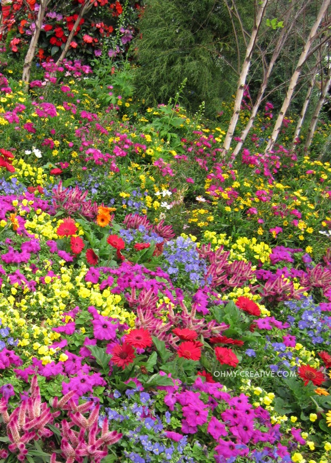 Colorful Flowers Epcot International Flower and Garden Festival  |  OHMY-CREATIVE.COM