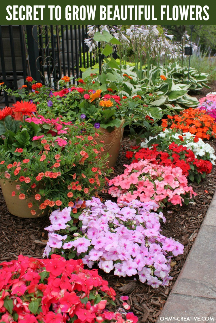 How to grow beautiful flowers oh my creative my secret to growing the most beautiful flowers its easy and you will have tons izmirmasajfo