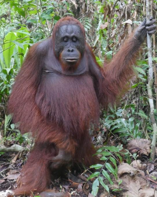 Giro in barca nella giungla degli orangotanghi