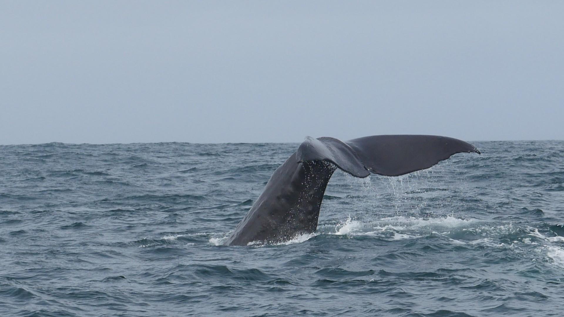 Kaikoura, Wale Watching, Seelöwen und grandiose Landschaft