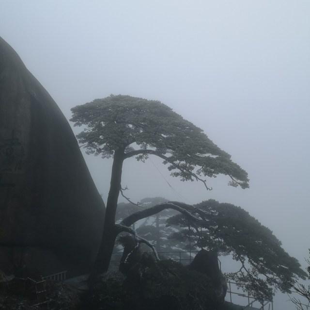 Wandern in Huangshan, den gelben Bergen, die Guest greeting pine