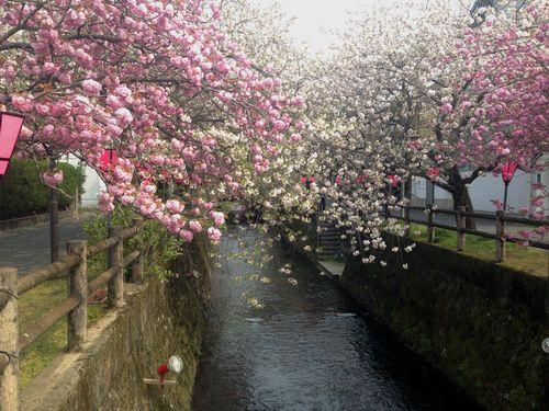 中野川2014.4.11
