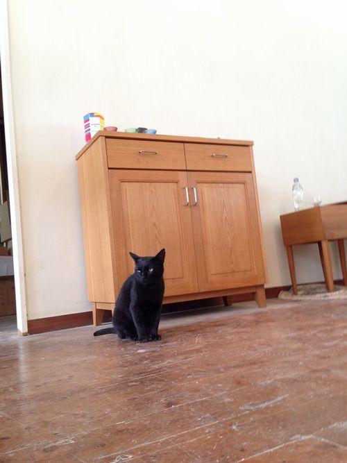 木正舎と黒猫