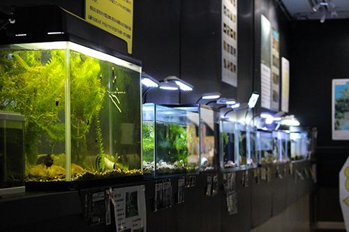日田の淡水魚が沢山いました。中には絶滅危惧種もいて・・・