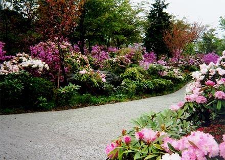 上津江しゃくなげ園