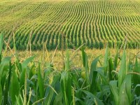 EPA Adds Transparency to Soften Feud Between Oil and Farmers re Ethanol Mandate