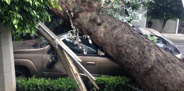 Se cae árbol sobre auto