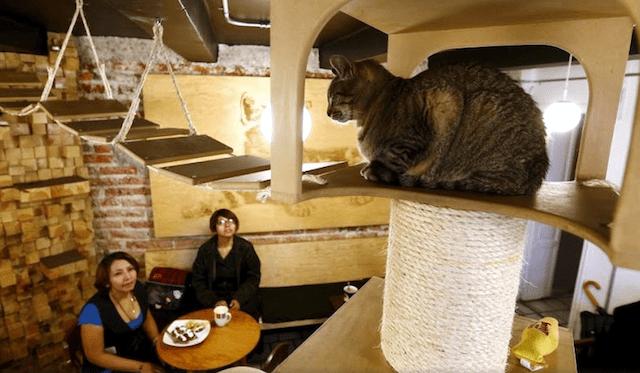 Café para gatos