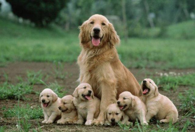 18 de diciembre de 2019, dinero empresa, cuidar perros, buscan a una persona que sea cuidador de perros (Imagen: Especial)