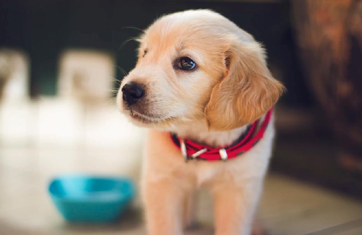 25 de febrero 2020, Comida para perros y gatos, Perro, Cachorro, Comida, Mascotas