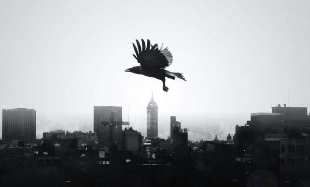 14 de febrero de 2020, un ave sola vuela sobre la CDMX (Imagen: Unsplash)