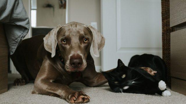 Crematorio para mascotas en CDMX (Imagen: Unsplash)