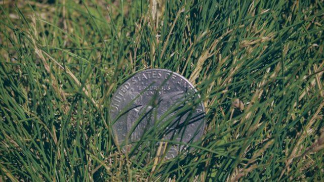 Moneda dólar (Imagen: Unsplash)