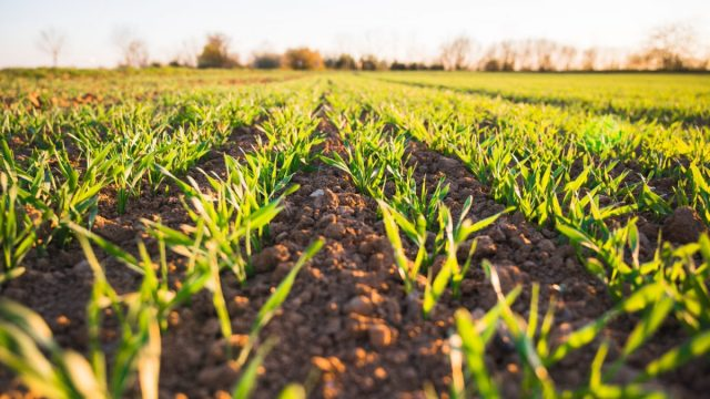 Rompe récord agro mexicano en superávit con Estados Unidos