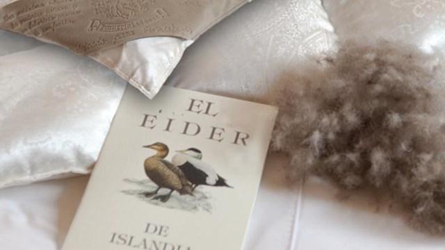 Edredón de pato Eider (Imagen: Ferdown.com)