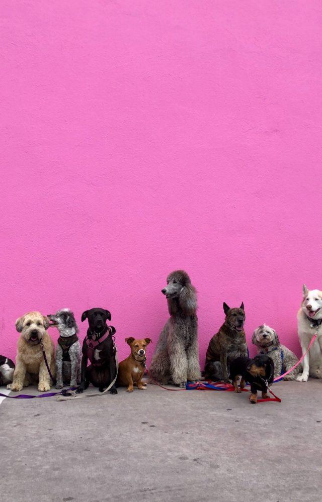 Mascotas de compañía (Imagen: Unsplash)