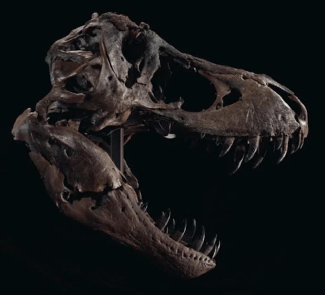 Esqueleto dinosaurio T-Rex (Imagen: Christie's)