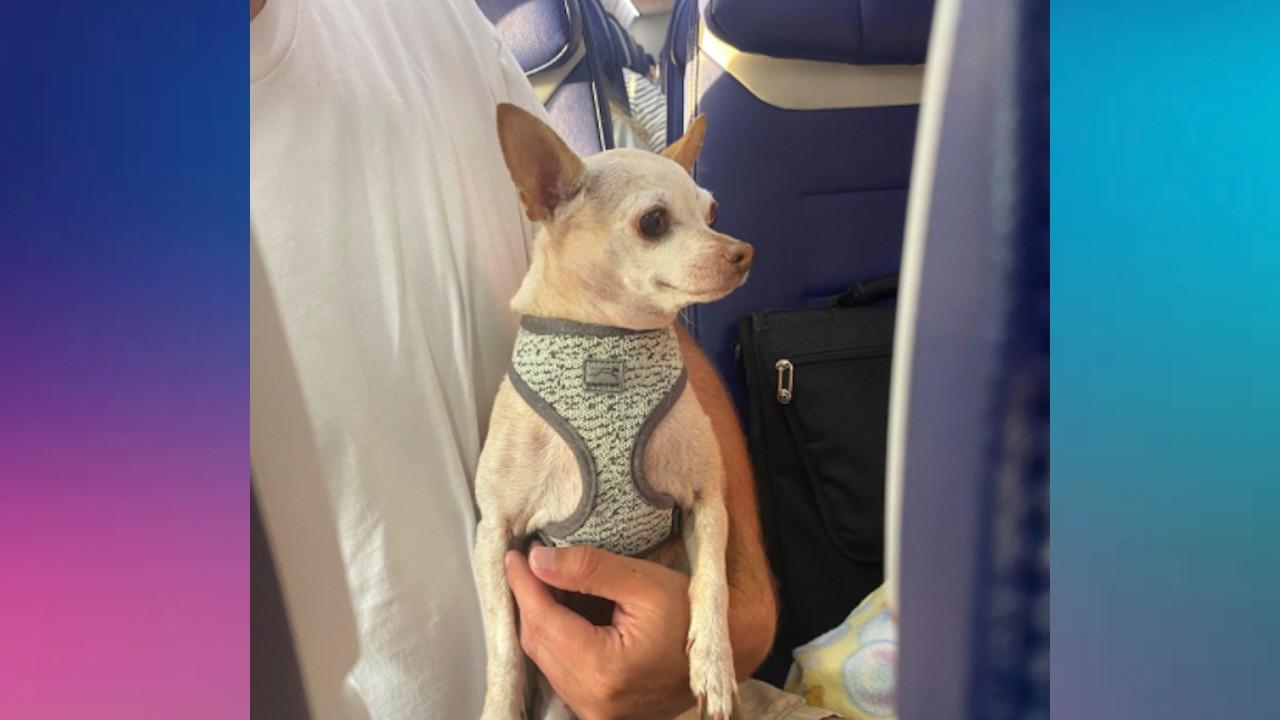 Viajar animales en avión (Imagen: Twitter @LoweLife_)