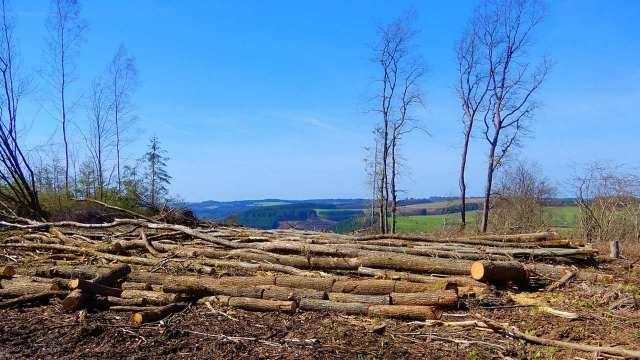 Sembrando Vida podría haber ocasionado pérdidas de 72 mil hectáreas de bosques: WRI