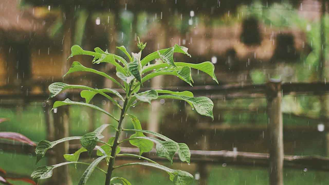 Cosecha de lluvia