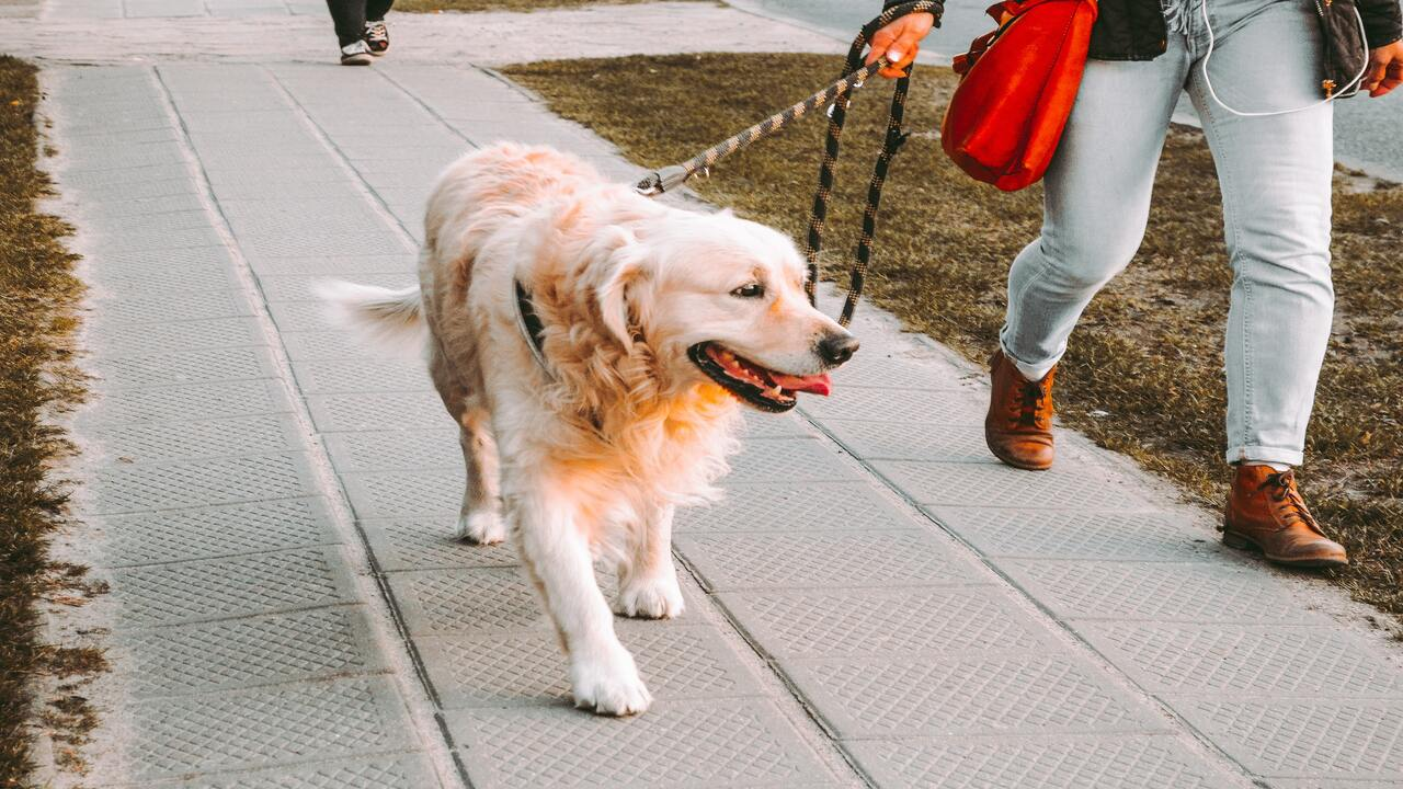 cuánto cuesta tener un perro como mascota