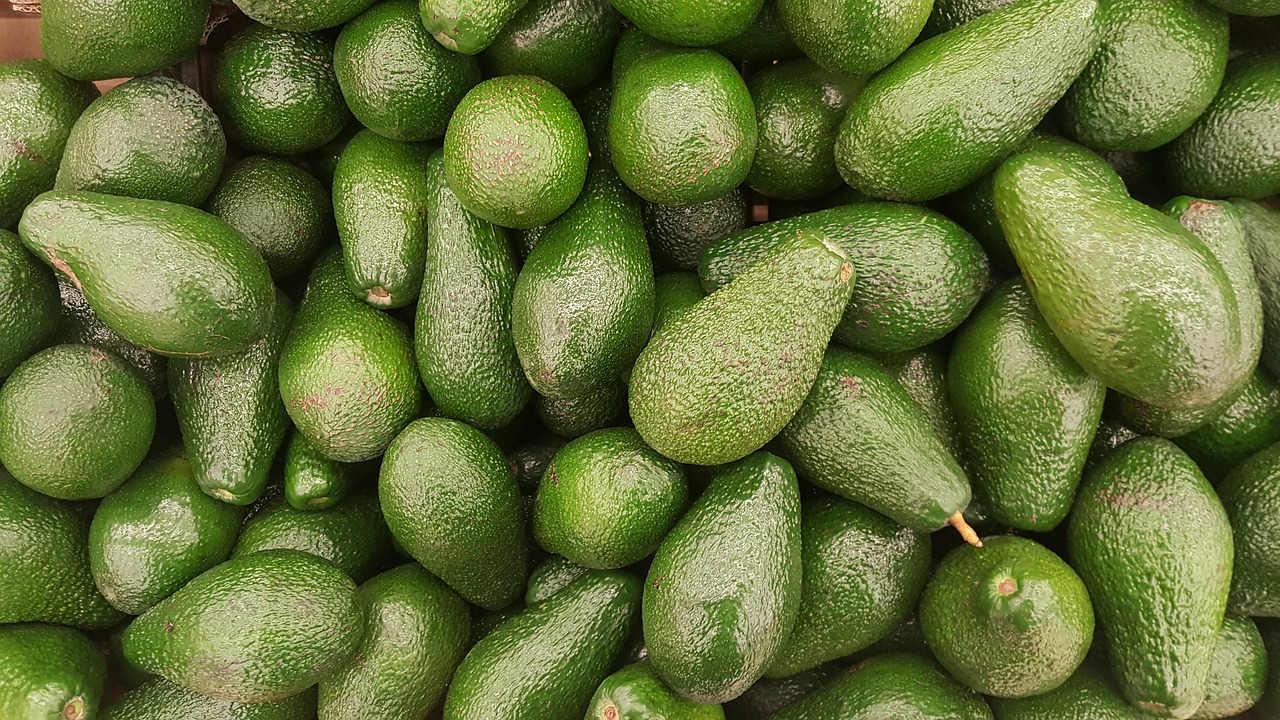 OCDE: Aguacate mexicano será la fruta tropical más vendida del mundo en 2030