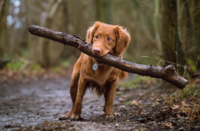 Multa por no levantar popo de perro