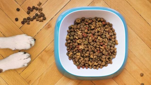Proponen eliminar IVA en alimentos de animales