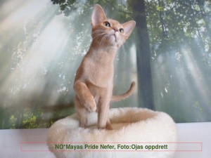 Mayas Pride Nefer