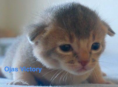 cropped-Victory2782019-1.jpg