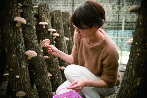 原木しいたけ狩りと食べ比べ体験