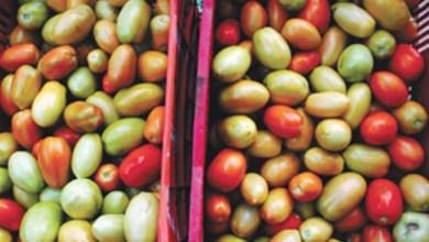 Photo of Tomate é o vilão da cesta básica no Cariri
