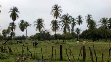 Photo of Final de semana chuvoso no Cariri: acompanhe relatório e previsão do tempo