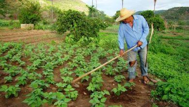 Photo of Prazo para entrega da declaração de propriedade rural vai até 30 de setembro