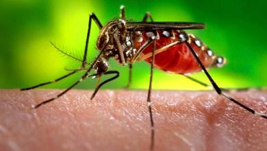 Photo of Quase 600 mil casos confirmados de dengue são registrados no Brasil em 2019