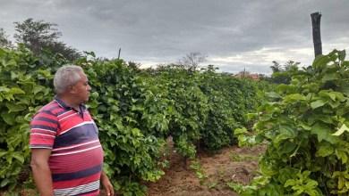 Photo of Milagres-CE: Agricultura tem saldo positivo nos primeiros meses da Gestão Lielson Landim