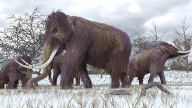 Photo of Ciência: A possibilidade cada vez mais real de termos zoológicos de animais extintos; Confira