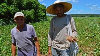 Foto de Câmara aprova auxílio emergencial para agricultor familiar na pandemia