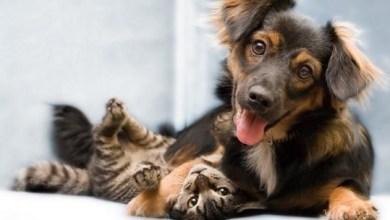 Foto de Está aprovada a lei que pune em até 5 anos maus-tratos contra cães ou gatos; confira