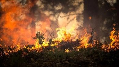 Photo of Alerta! Ceará ultrapassa marca de mil focos ativos de queimadas em 2019