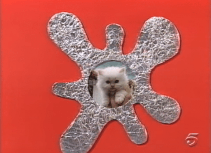 quadros de gato e alumínio