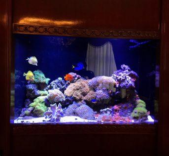 15 Central Park West Penthouse Reef Aquarium