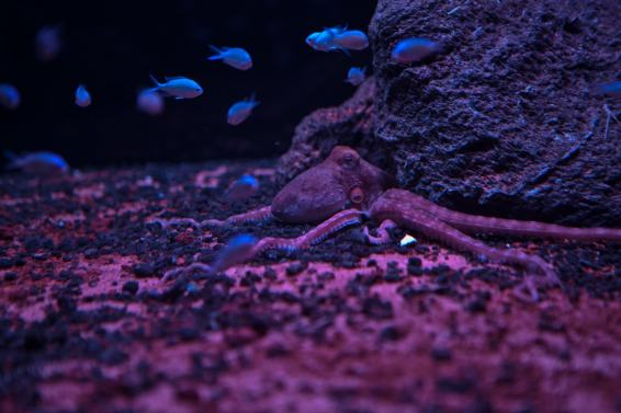 custom glass aquariums France