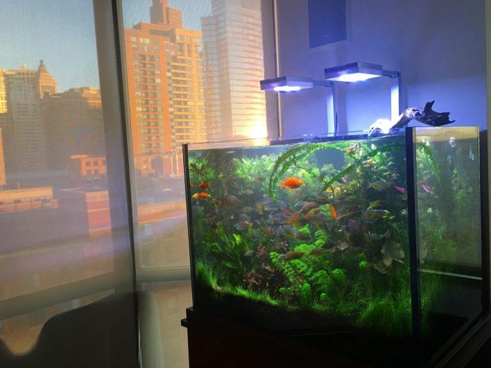 Battery Park Freshwater Live Plant Aquarium